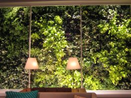 living_wall-indoor-outdoor